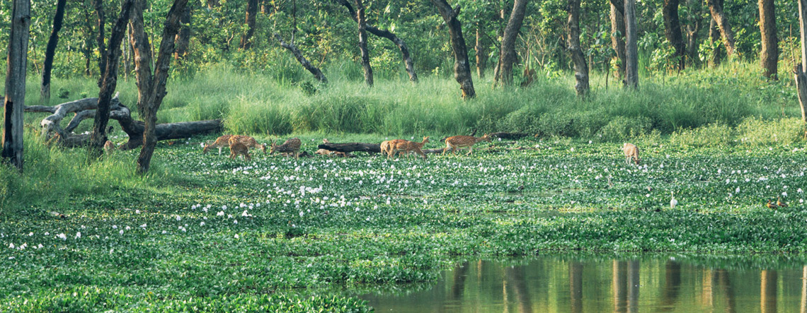 Nepal Chitwan National Park Travel Guide, Attractions