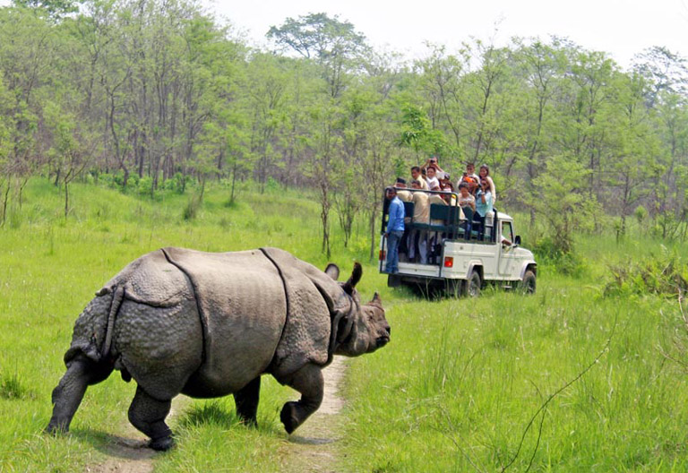 Asian Rhinoceros in Chitwan National Park