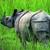 Chitwan Travel Guide
