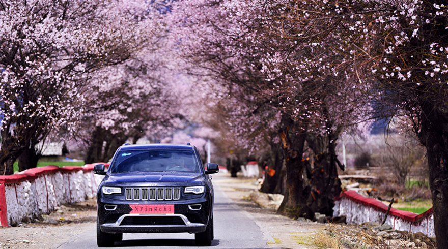 Drive to Nyingchi on the Beautiful Peach Blossoms Road