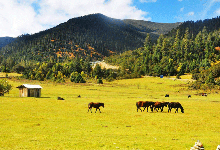 Nyingchi, the south of Tibet